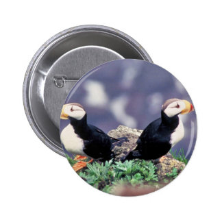 Horned Puffins Buttons