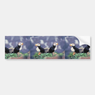 Horned Puffins Bumper Sticker