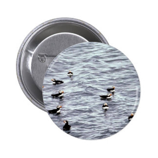 Horned Puffins on the Water Pinback Button