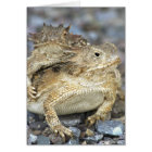Horned Toads 014