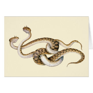 Horned Vipers Greeting Card