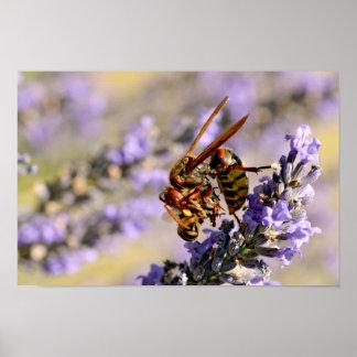 Hornet eating bee poster