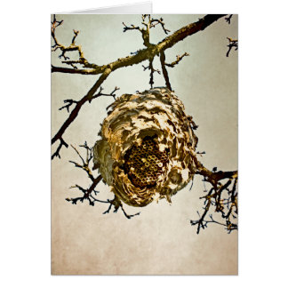 Hornet's Nest Cards