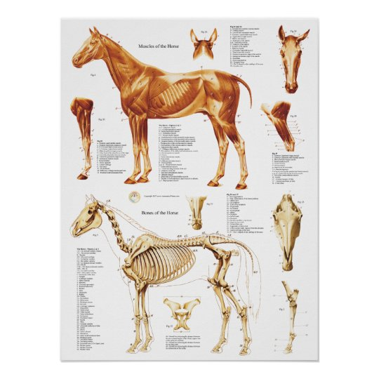 Anatomy muscle poster