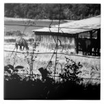 Horse and Barn Ceramic Tiles