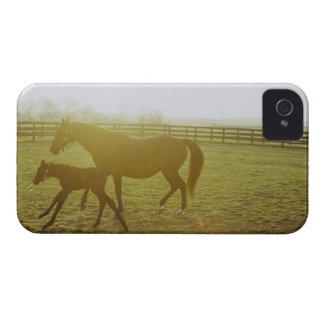 Horse and foal running in pasture Case-Mate iPhone 4 case