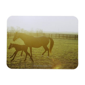Horse and foal running in pasture rectangular photo magnet