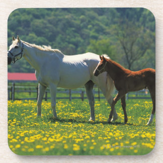 Horse and her foal standing in a field coaster