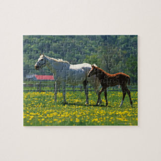 Horse and her foal standing in a field jigsaw puzzle