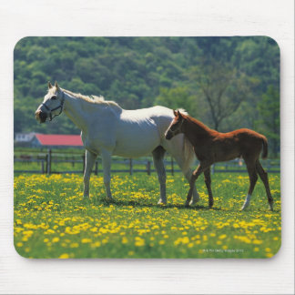 Horse and her foal standing in a field mouse mat
