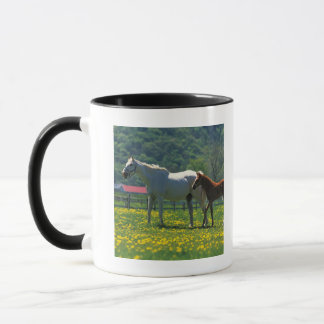 Horse and her foal standing in a field mug