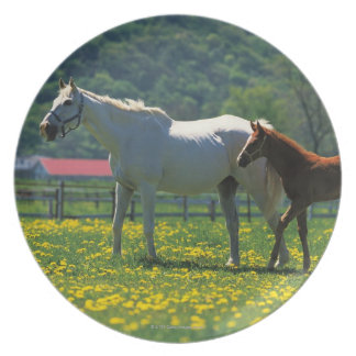 Horse and her foal standing in a field plate