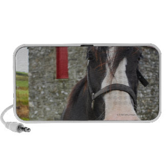 Horse and stone barn in rural England Travel Speaker