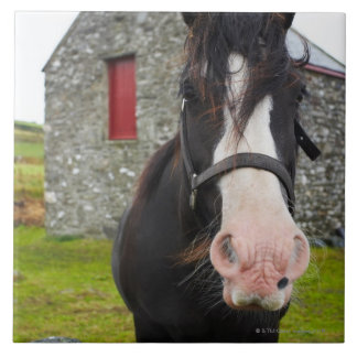 Horse and stone barn in rural England Tile