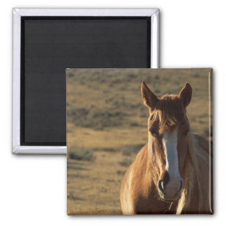 Horse and Western Background Square Magnet