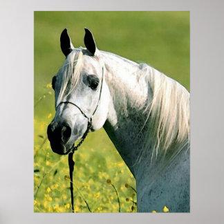 Horse Artwork Poster
