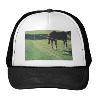horse at the fence trucker hats