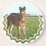 Horse Baby Coasters