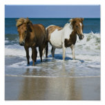 Horse Beach Canvas Print
