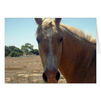 Horse_Beauty,_ Greeting Card