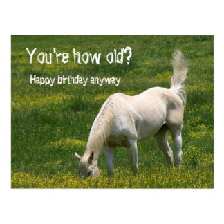 Horse Birthday Post Cards