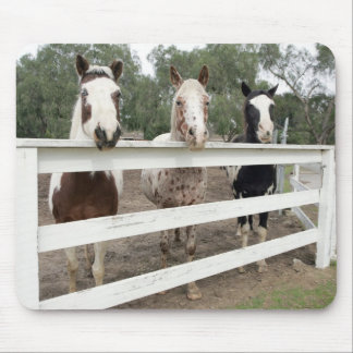 Horse buddies mouse pad