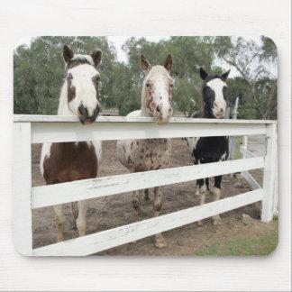 Horse buddies mousepads