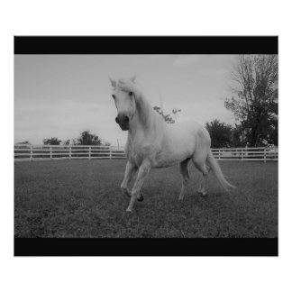 Horse Cantering Photo Print