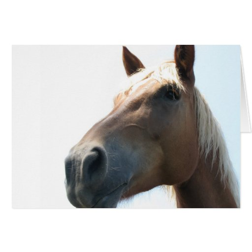 Horse Lovers Birthday Gifts T Shirts Art Posters