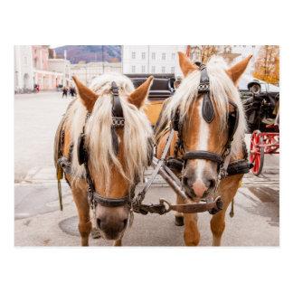 Horse Carriage   Austria Postcard