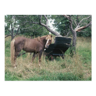 Horse Checking Out Old Buggy Postcard