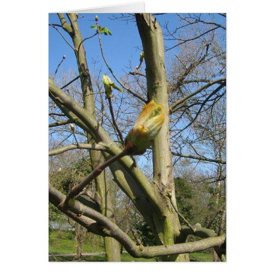 Horse Chestnut bud Card