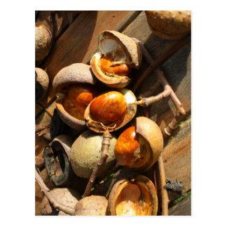 Horse Chestnut Post Card