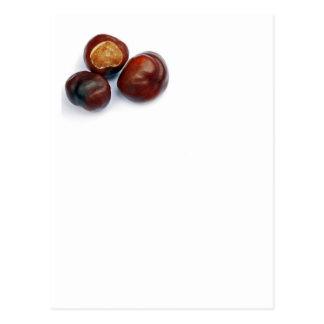 horse chestnut postcard