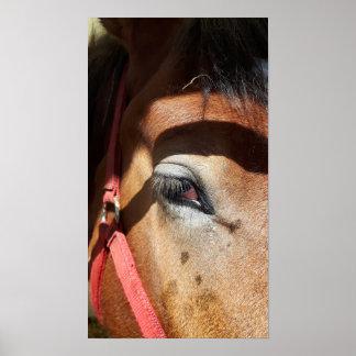 Horse Close-Up at Rockton World's Fair Poster