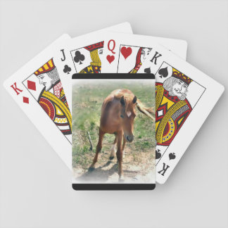 Horse, colt, pasture playing cards