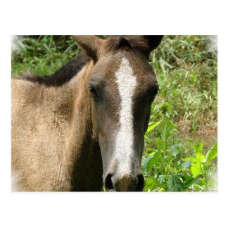 Horse Colt Postcards