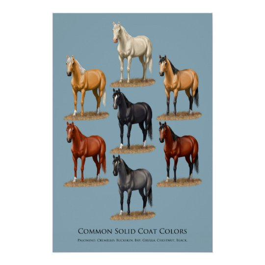 Horse Common Solid Coat Colours Chart Poster