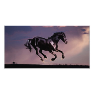 Horse dance at sunset photo greeting card