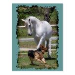 HORSE & DOG PLAY POST CARD
