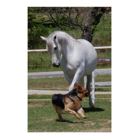 HORSE & DOG PLAY Poster