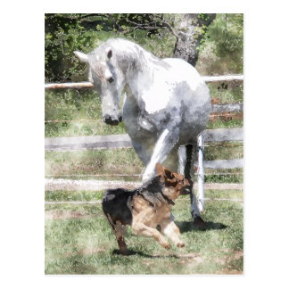 HORSE & DOG PLAY WATERCOLOR POSTCARD