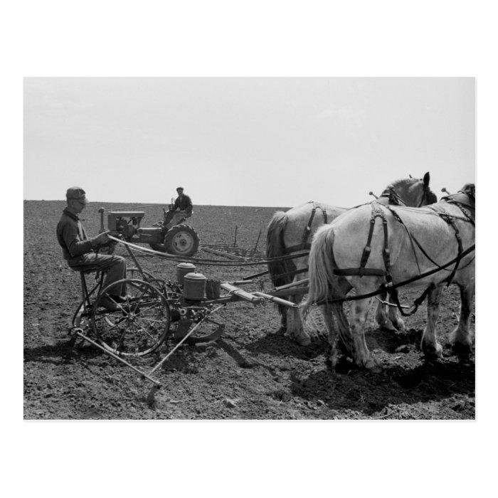 Horse-Drawn Corn Planter, 1940 Postcard