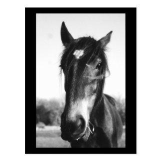 Horse Dunwich England - Postcard