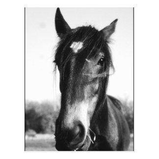 Horse, Dunwich, England - Postcard