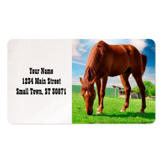 horse eating grass pack of standard business cards