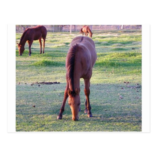 Horse Eating Post Card