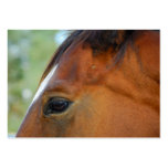 Horse Face business cards
