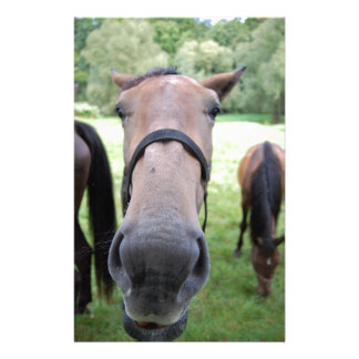 Horse face personalised stationery