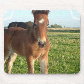 Horse Foal Mouse Pad